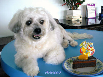 Cookie's 10th Birthday