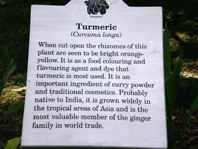 Turmeric Fried Rice黄姜炒饭