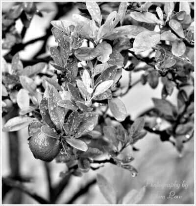 Wordless Wednesday ~ Black & White Photo Shots